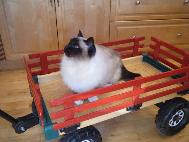 Child's wagon - cat not included