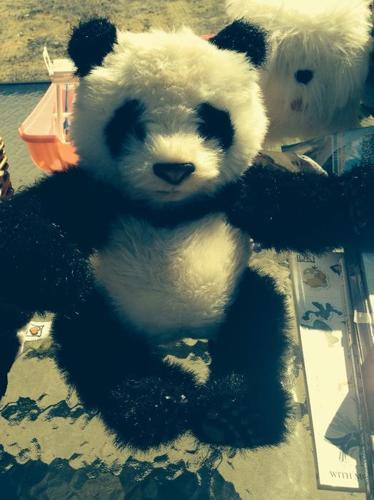 Panda - talks and moves